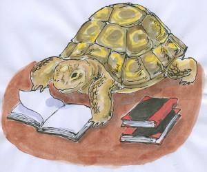 Tortoise.1